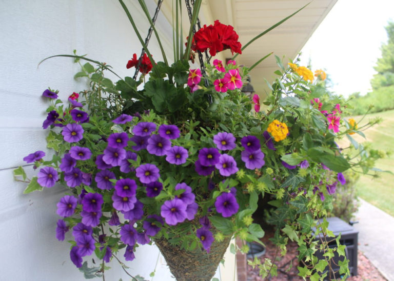Hanging basket planted with summer annual plants.