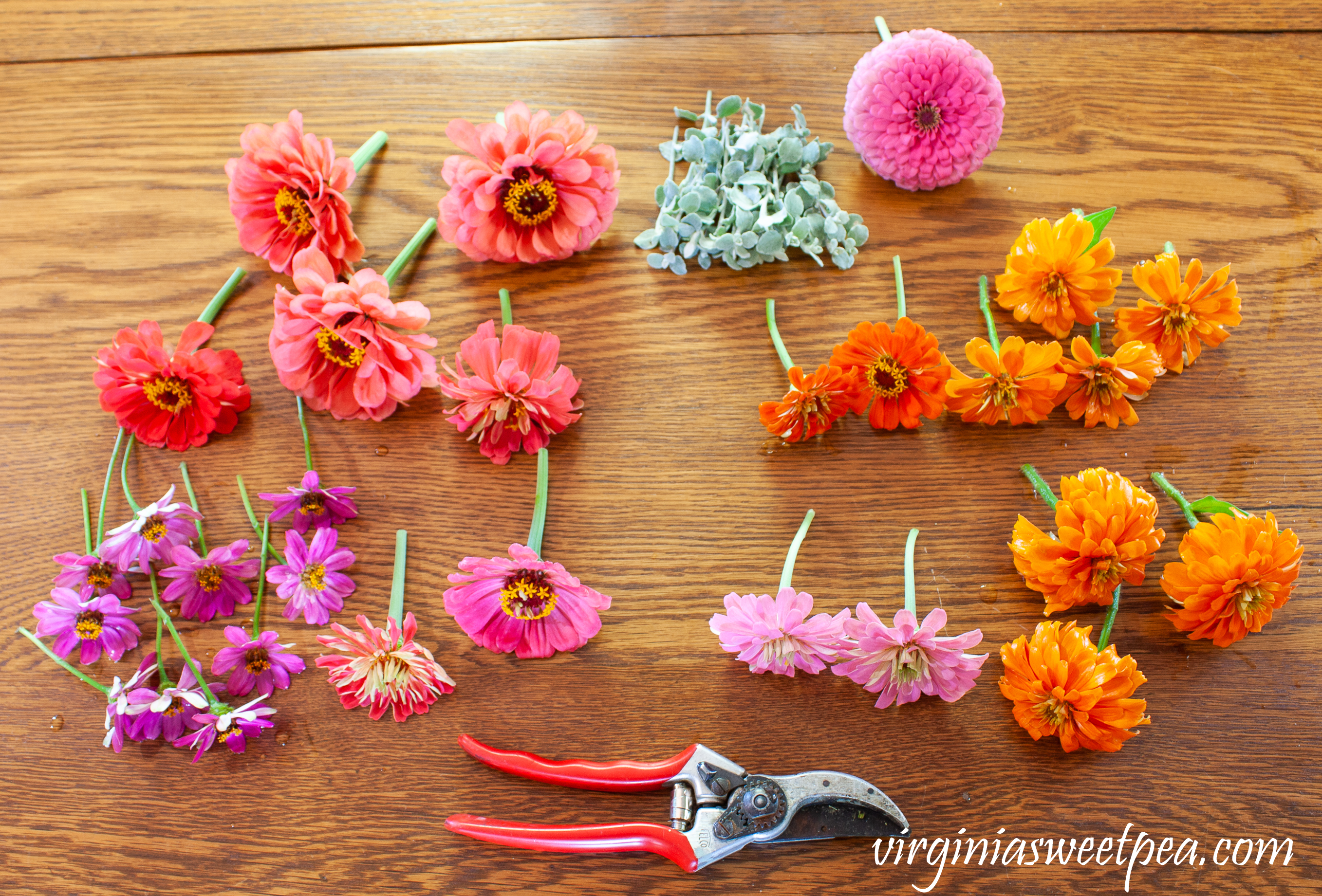 Cut Zinnias to use for an easy summer table centerpiece.