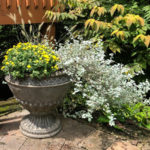 Easy Fall Update for Outdoor Pots