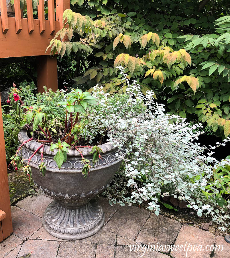 Pot planted with summer annuals that are tired and ready to be replaced for fall.