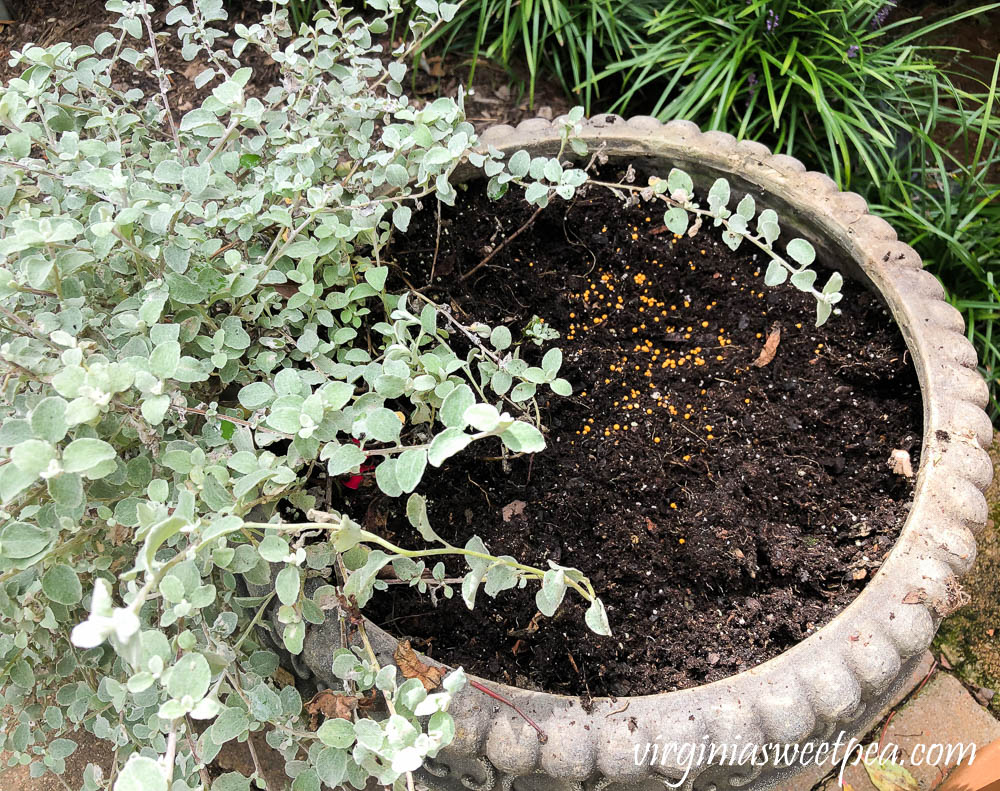 Replacing summer annuals with fall plants in outdoor pots.