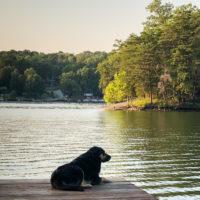 Lake House Basement Project - Update Two