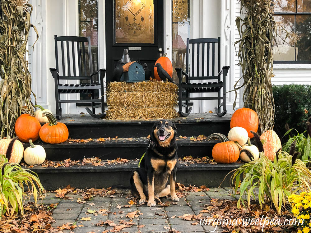 Sherman Skulina on a porch decorated for fall in Woodstock, Vermont
