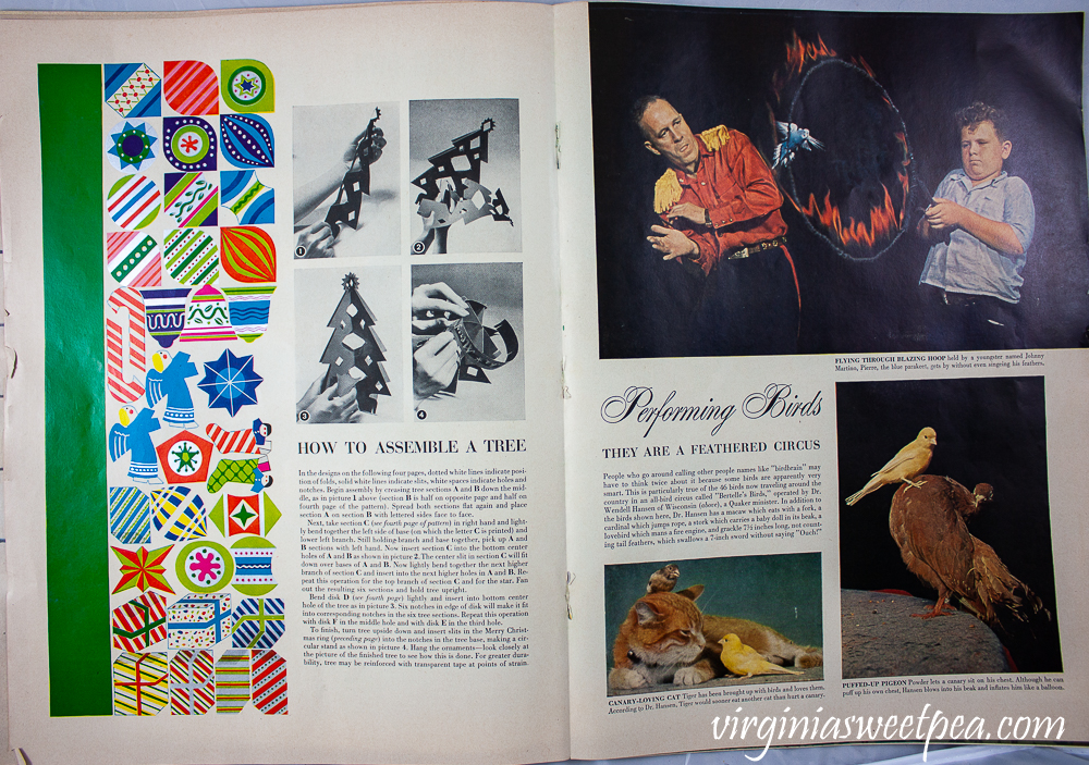 How to assemble a paper Christmas tree and a performing birds article from December 25, 1950 Life Magazine