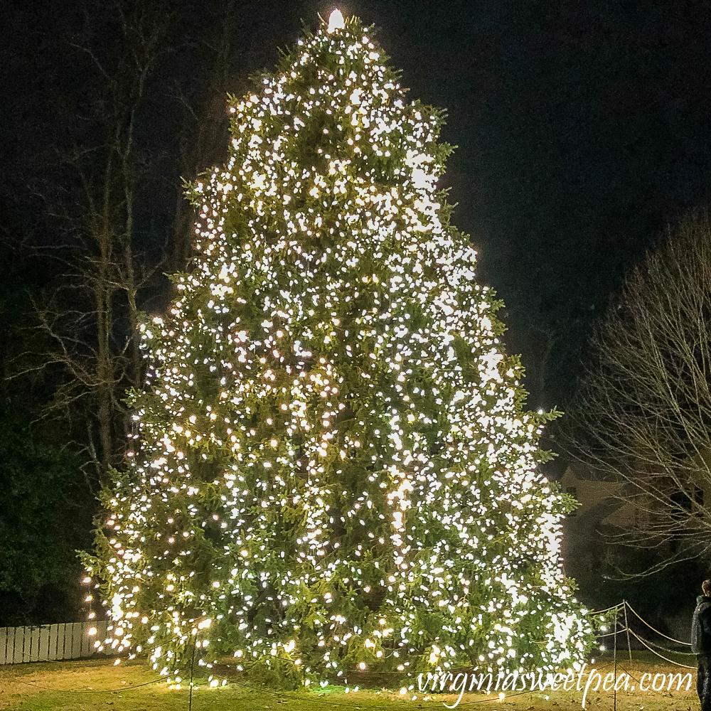 Christmas Tree in Colonial Williamsburg, Virginia
