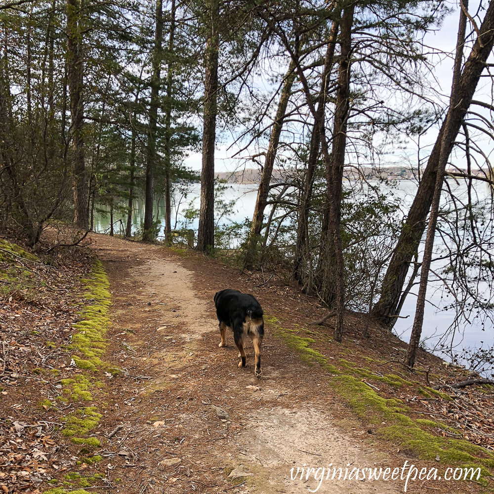 Sherman Skulina walking at Smith Mountain Lake State Park