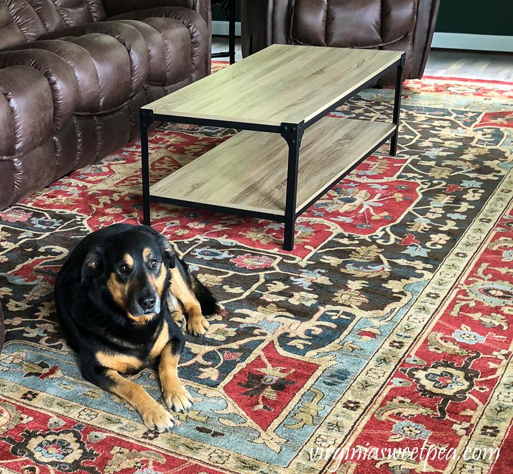 Dog on an oriental style rug
