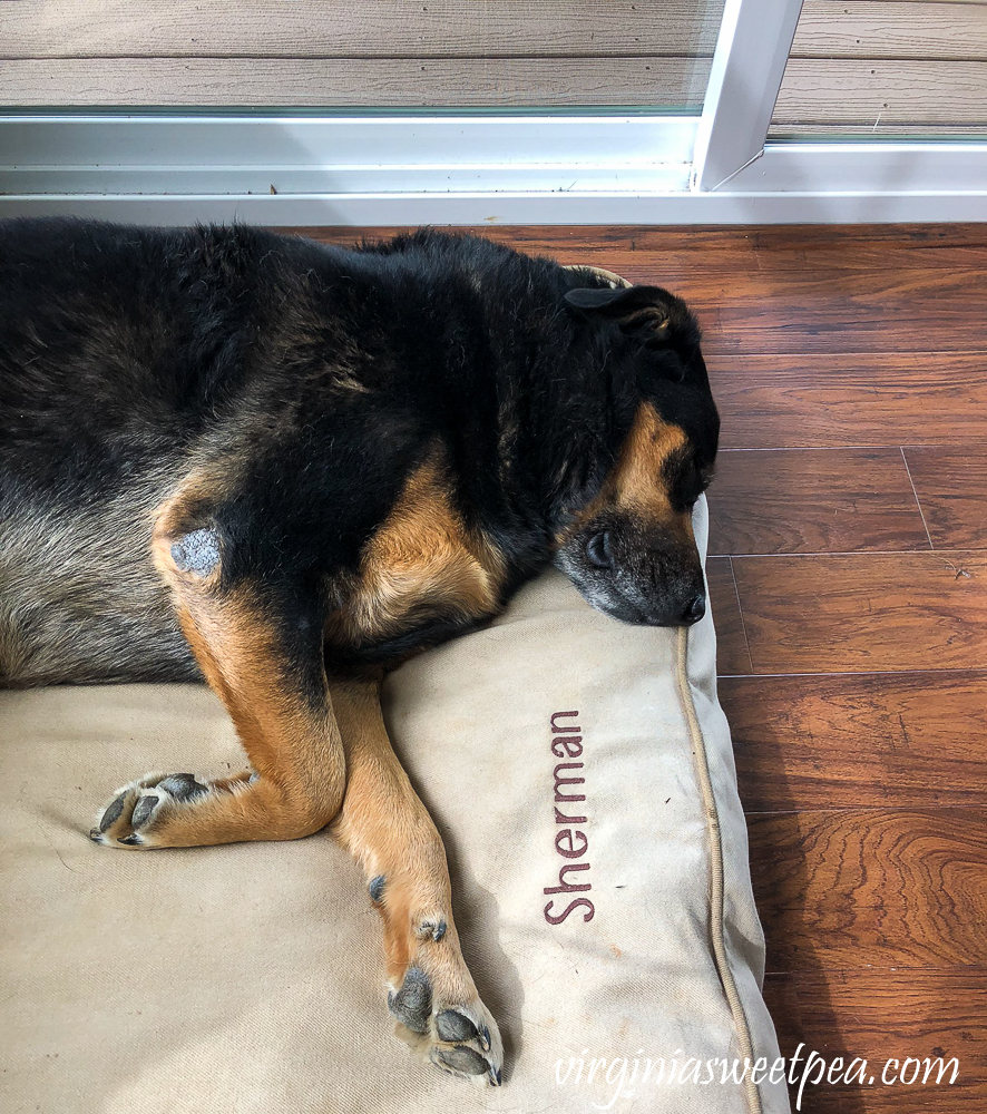 Sherman Skulina sleeping