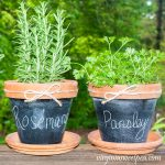 Chalkboard painted pots with rosemary and parsley