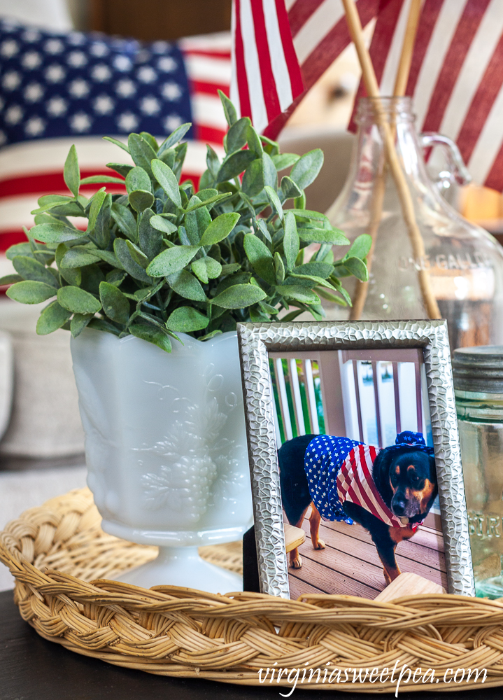 Patriotic display with a milk glass compote filled with a faux plant and a picture of a dog dressed in an Uncle Sam cosume