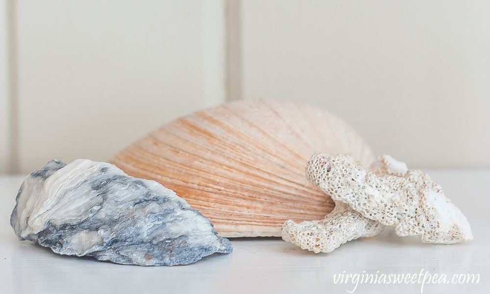 Clam shell, oyster shell, and coral pieces