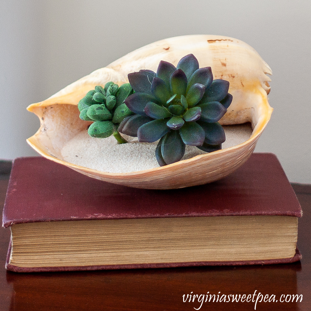 Shell filled with sand and succulents on top of a book