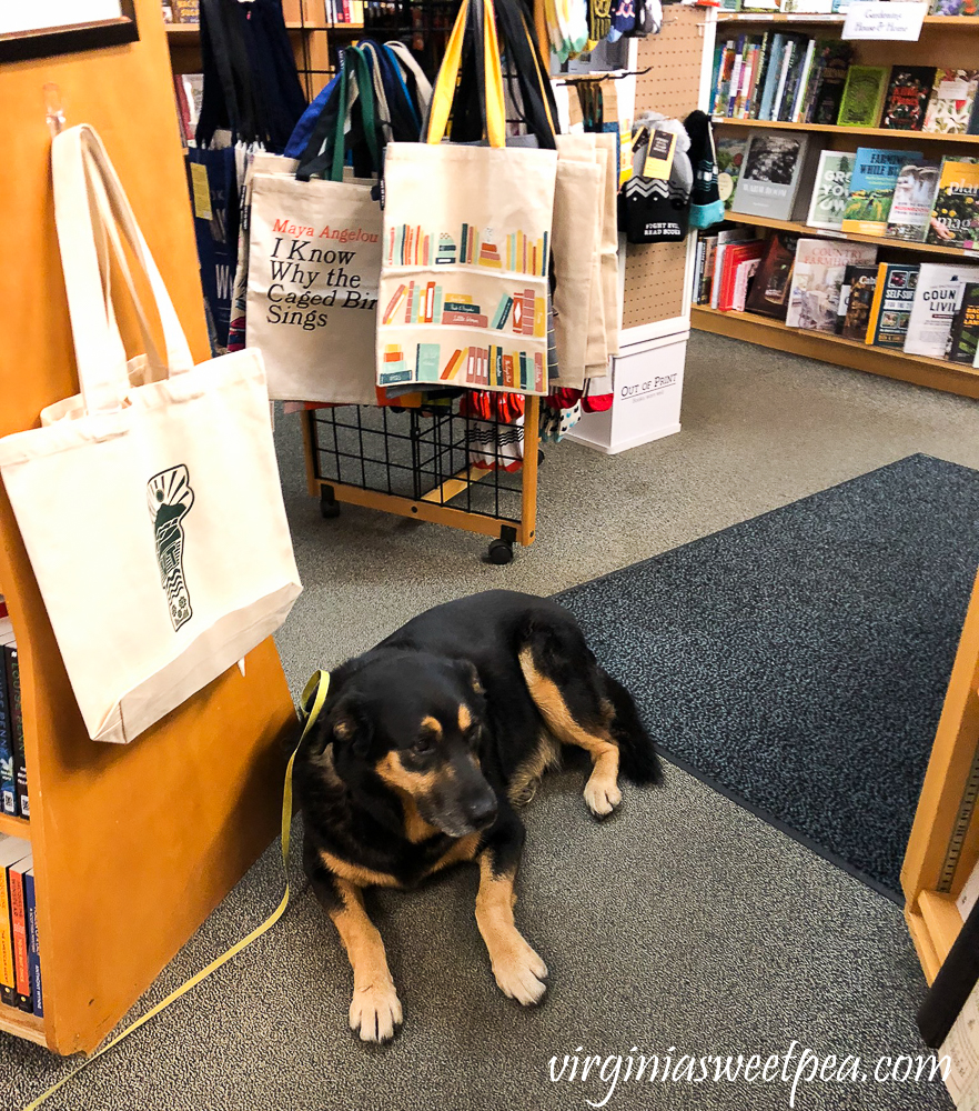 Dog friendly bookstore in Woodstock, VT