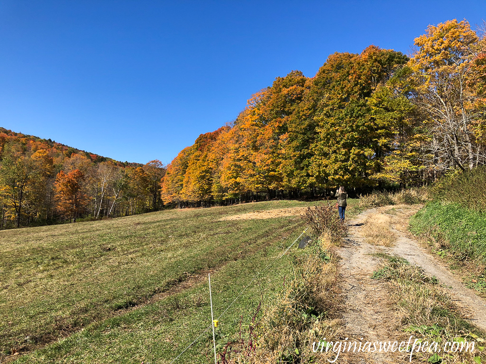 Fall foliage at Sugarbush Farm in Woodstock, VT