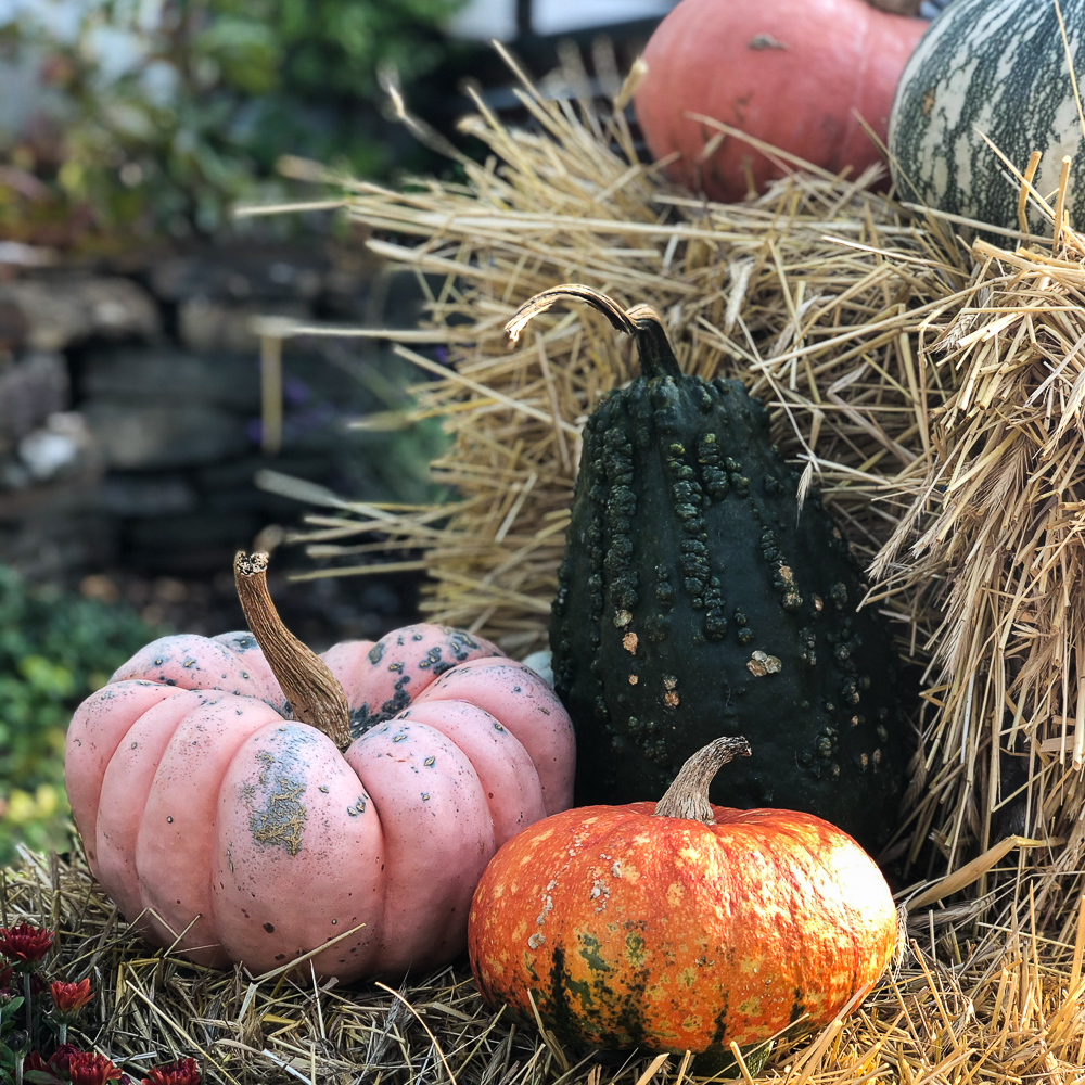 Gourds and pumpkins on a hay bale