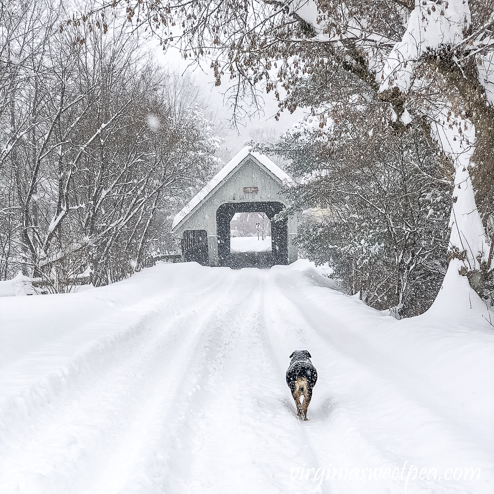 Sherman Skulina walking through the snow to Middle Bridge in Woodstock, Vermont