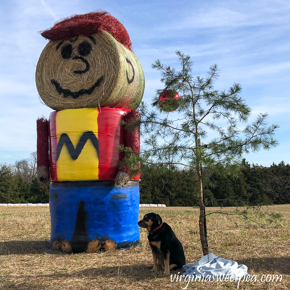 Charlie Brown made from haybales