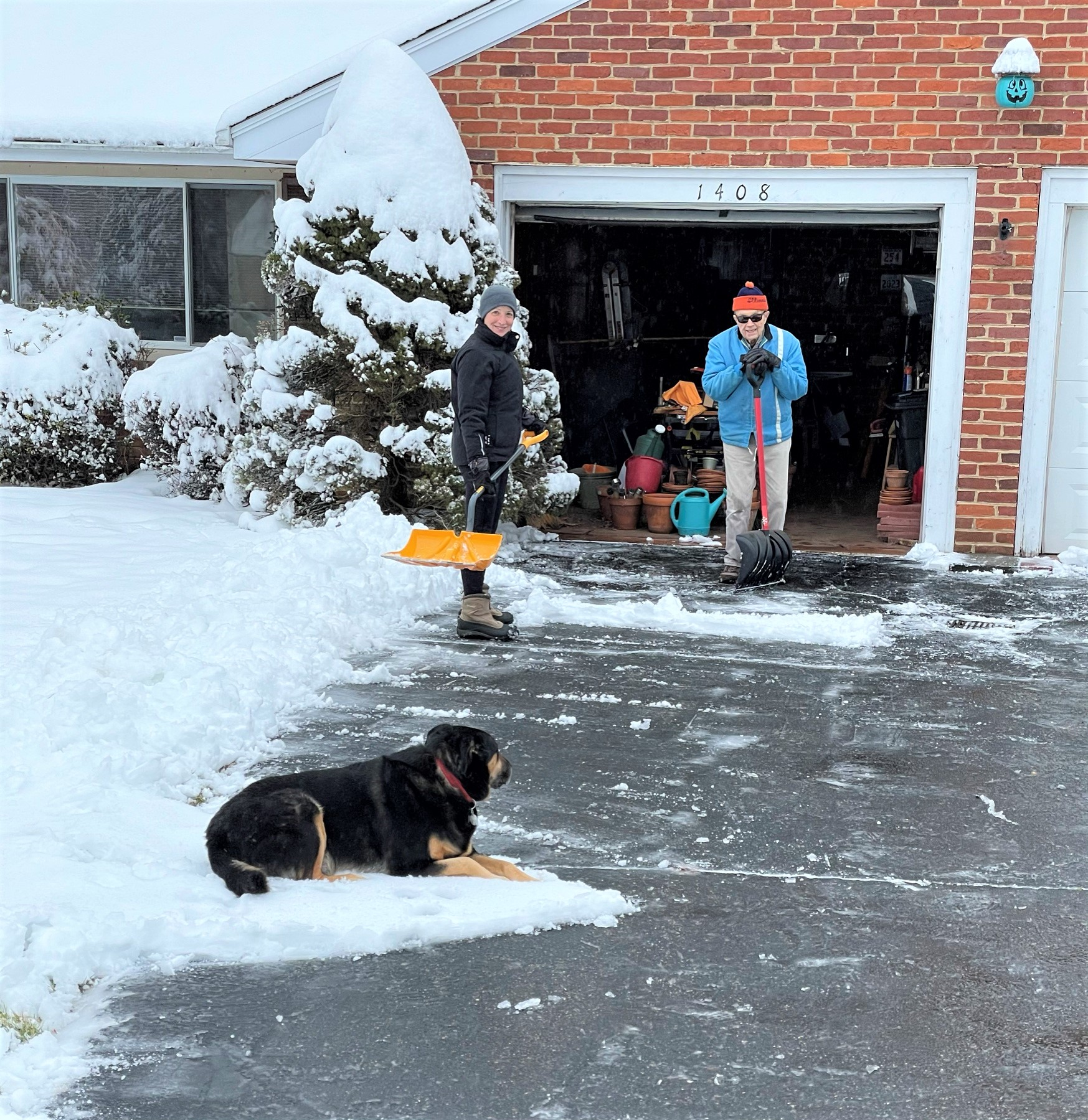 Dog on a driveway being snow shoveled