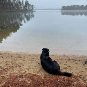 Dog admiring Smith Mountain Lake in Moneta, Virginia