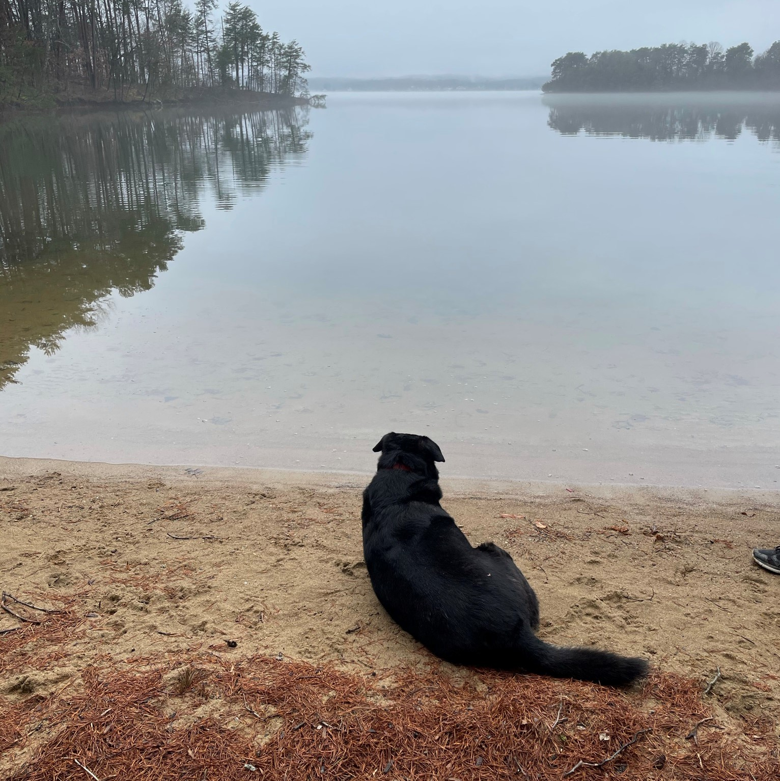 Dog admiring Smith Mountain Lake in Moneta, Virginia