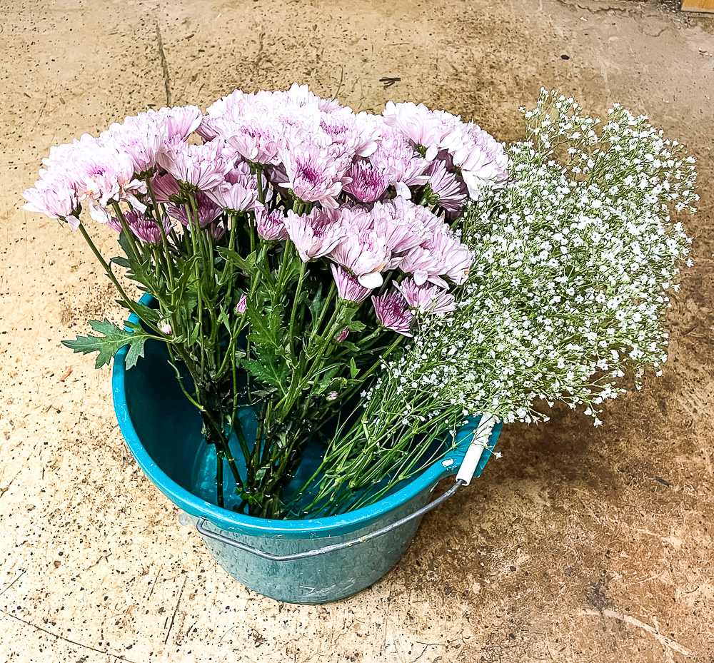 Purple Chrysanthemum and Baby's Breath in a bucket of water