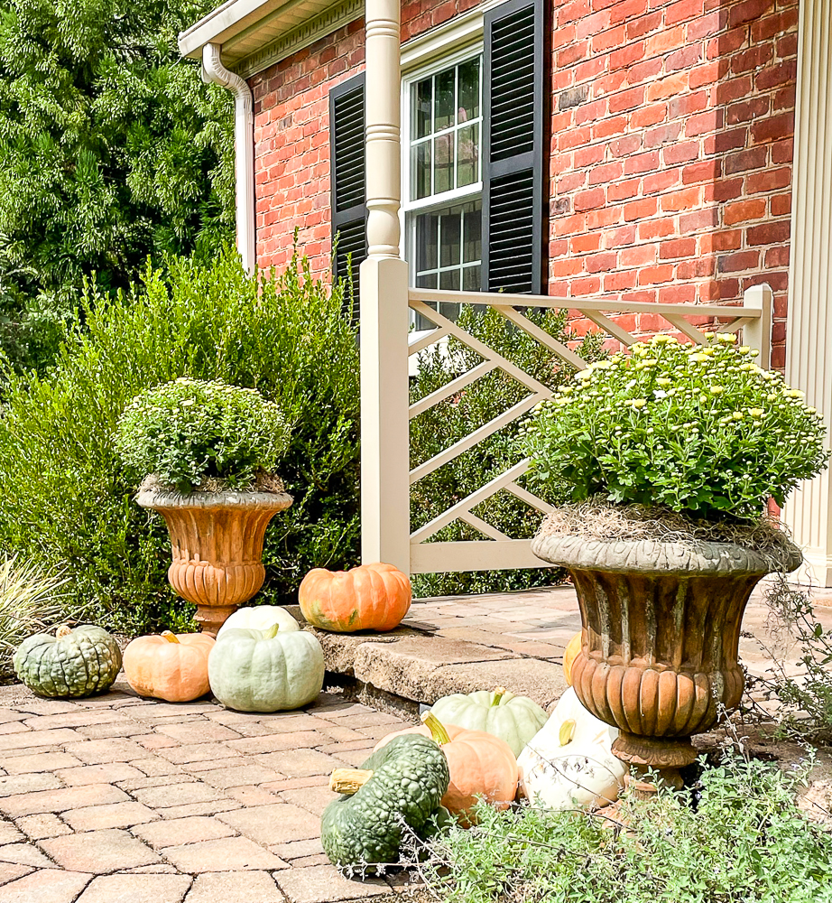 Mums in a cement urns surrounded by pumpkins