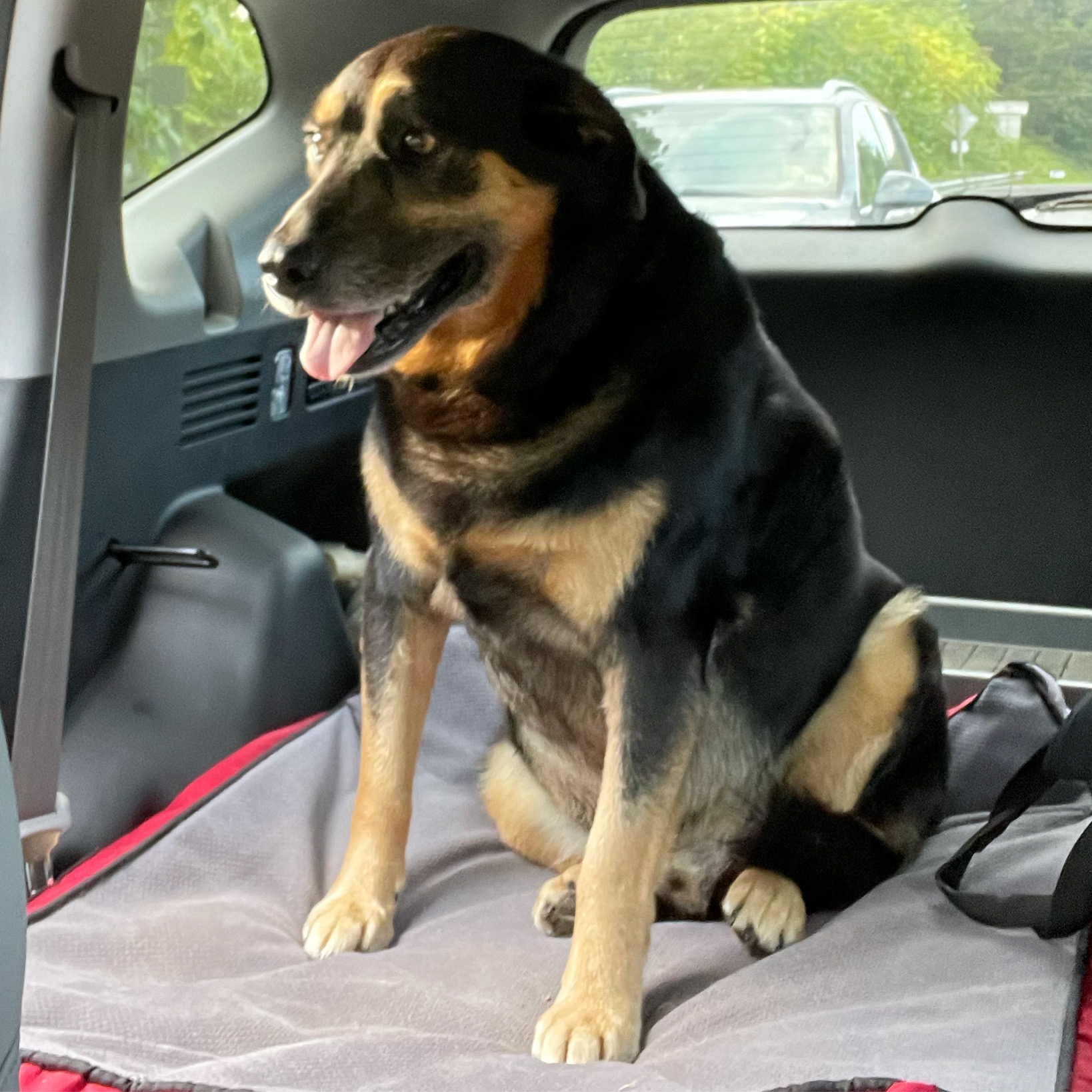 dog riding in a car on a dog bed